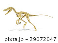 Velociraptor dinosaur, full skeleton scientifically correct, perspective view, with drop shadow on white background. 29072047