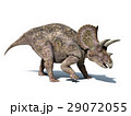 Triceratops dinosaur, isolated on white background, with clipping path.. 29072055