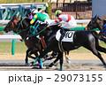 競馬 競走馬 サラブレッドの写真 29073155