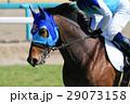 競馬 競走馬 サラブレッドの写真 29073158