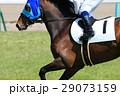競馬 競走馬 サラブレッドの写真 29073159