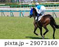競馬 競走馬 サラブレッドの写真 29073160