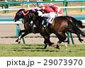 競馬 競馬イメージ 馬の写真 29073970