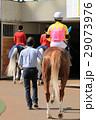 競馬 競馬イメージ 馬の写真 29073976