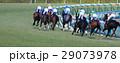 競馬 競走馬 サラブレッドの写真 29073978