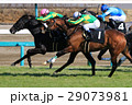 競馬 競走馬 サラブレッドの写真 29073981