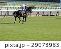 競馬 競馬イメージ 馬の写真 29073983