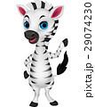 Cute baby zebra cartoon 29074230
