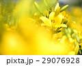 花 ゆり ユリの写真 29076928