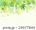 新緑 青もみじ 葉のイラスト 29077840