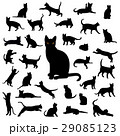 Black Cat Collection 29085123