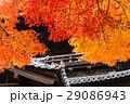 京都秋楓 29086943