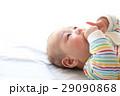 指しゃぶりをする赤ちゃん(生後三か月) 29090868