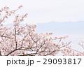 桜の背景 29093817