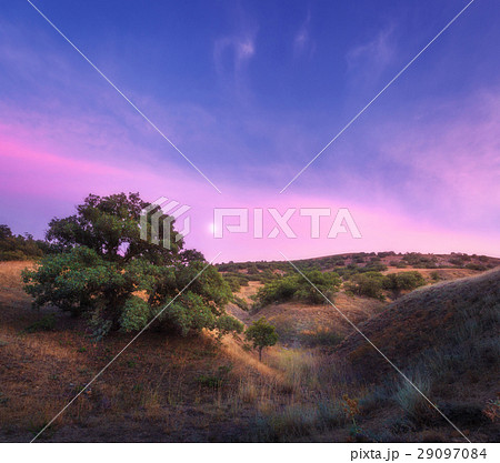 Night landscape with green tree on the hill 29097084