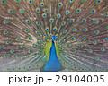鳥 29104005
