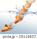 DP-CO-001 29110637