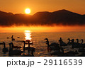 白鳥 猪苗代湖 朝日の写真 29116539