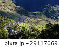 農業 背景 きれいの写真 29117069