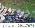 農業 背景 きれいの写真 29117074