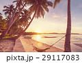 背景 海 ヤシの写真 29117083
