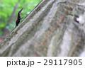 昆虫 夏 クワガタの写真 29117905