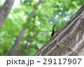 昆虫 夏 クワガタの写真 29117907