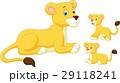 ライオン 獅子 ベビーのイラスト 29118241