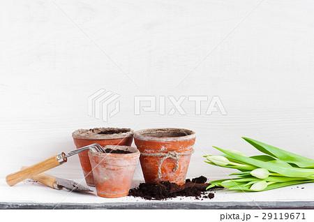 Garden tools and tulips on the white wooden shelfの写真素材 [29119671] - PIXTA