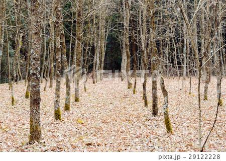 植林された森 29122228
