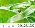 虫 昆虫 てんとう虫の写真 29123135