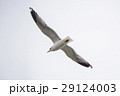 Flying One seagull on the white sky background 29124003