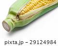 とうもろこし 玉蜀黍 コーンの写真 29124984