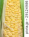 とうもろこし 玉蜀黍 コーンの写真 29124986