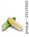 とうもろこし 玉蜀黍 コーンの写真 29125000