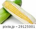 とうもろこし 玉蜀黍 コーンの写真 29125001