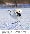 鶴 丹頂鶴 鳥の写真 29127936