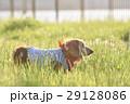 老犬イメージ 29128086