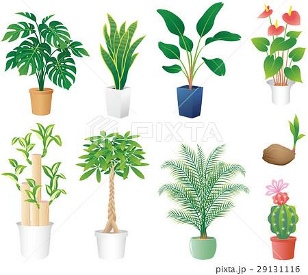 観葉植物のイラスト素材 29131116 Pixta