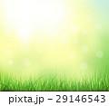 植物 太陽 夏のイラスト 29146543