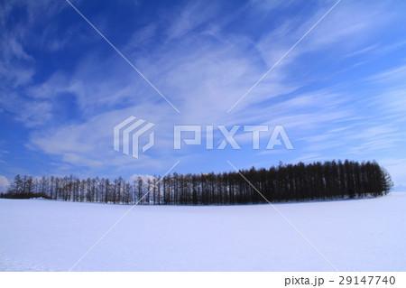 冬の美瑛 29147740