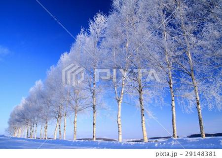 冬の美瑛 29148381