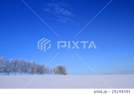 冬の美瑛 29148385