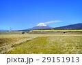新幹線ドクターイエローと富士山 29151913