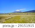 新幹線ドクターイエローと富士山 29151915