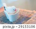 文鳥 29153106