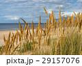 浜辺 砂 草の写真 29157076