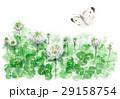 クローバー シロツメクサ 花のイラスト 29158754