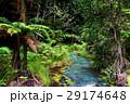 レッドウッド 森林公園 森林の写真 29174648