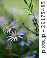 植物 工場 プランツの写真 29175485